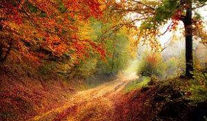Jak cieszyć się z jesieni z aparatem w ręku