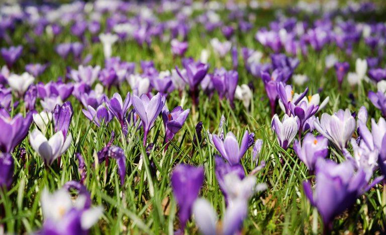 BHP przy robieniu zdjęć wiosną